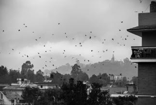Chhauni View 2017