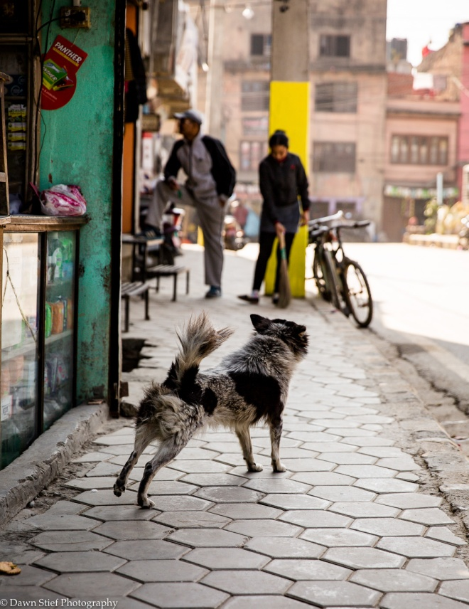 Love Hate Kathmandu-4