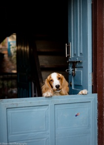 How much is that doggie in the doorway?