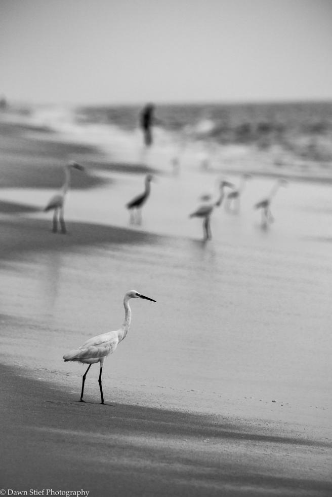 marari beach-37