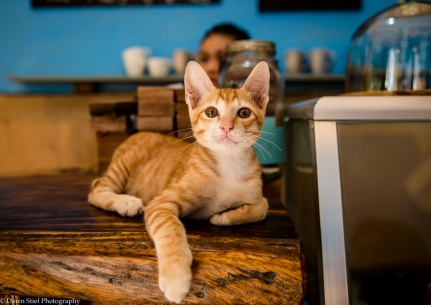 Kep Coffee Kitty