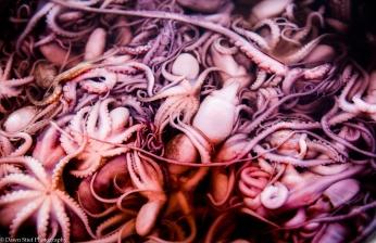 Kep crab market octopus