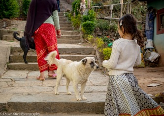 One of the many friendly dogs we encountered on the walk up to Aadinath Temple